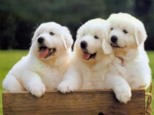 tips merawat anak anjing bagi pemula