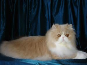 Cara Mengatasi dan Membasmi Kutu Pada Kucing