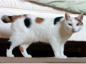 cara merawat kucing kampung yang baik dan benar