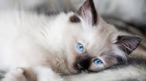 5 Penyakit Kucing Paling Berbahaya
