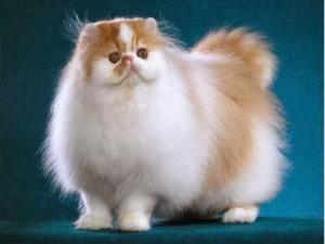 Tips Merawat Kucing Bulu Panjang
