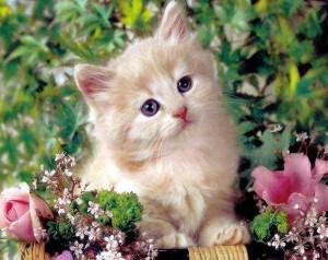 Cara Mengatasi Penyakit Kulit Pada Kucing