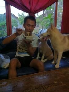 AWAS…!! Makanan Ini Berbahaya Bagi Anjing Kita