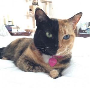 obat kutu kucing