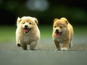 Cara Memelihara Anjing Dengan Baik Dan Benar