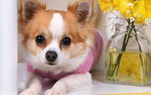 Peraturan Dasar Perawatan Anakan Anjing