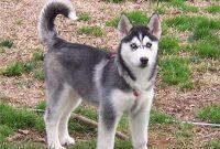 Jenis-jenis Anjing serta Cara Melatih dan Merawat