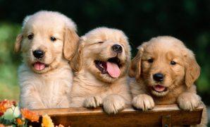 Menjaga Kesehatan Bulu dan Kulit Anjing